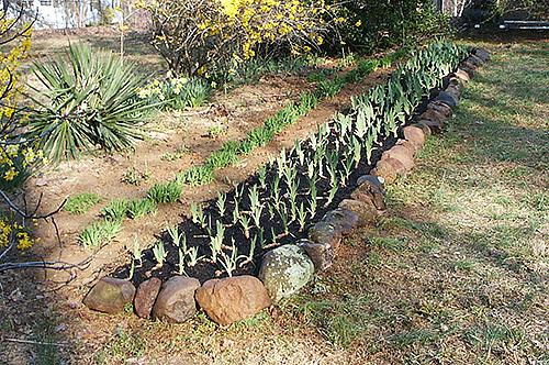 Kimberlyu0027s Garden