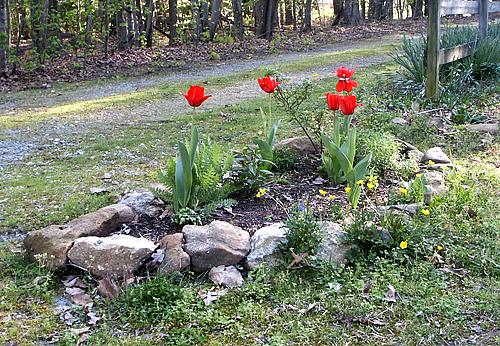 Planting For Multi Seasonal Flowering